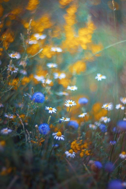 Flowers,wild,nature,yellow,white,green,bokeh, White nad Yellowphoto preview