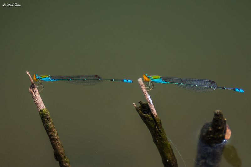 damselflies Same same but differentphoto preview