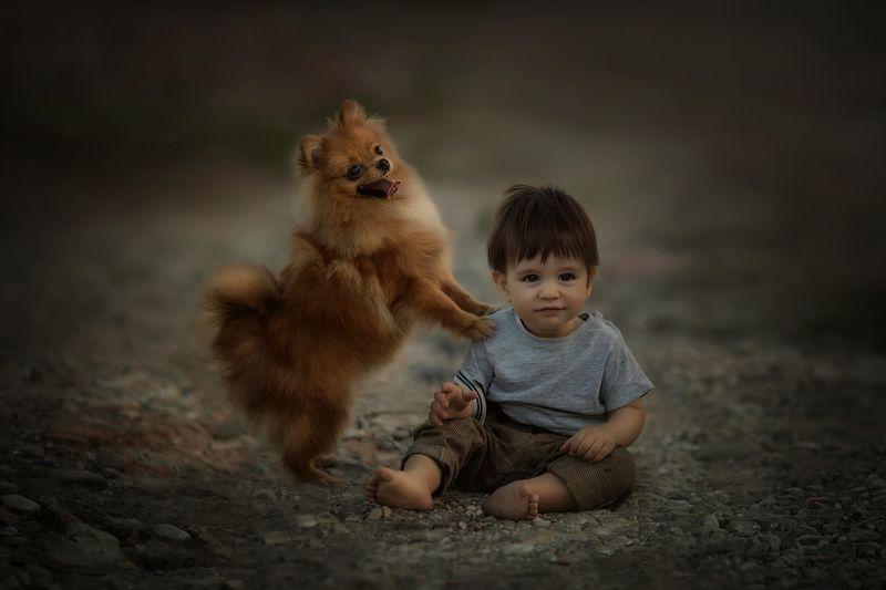 пес, рыжие, дети мой бобикphoto preview