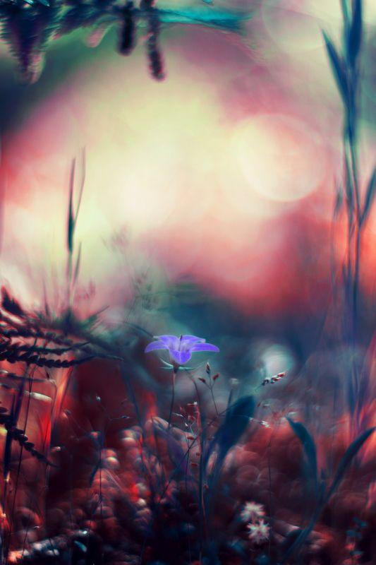 Flower,purple,nature,green,red,blue,light,spring,season Purplephoto preview