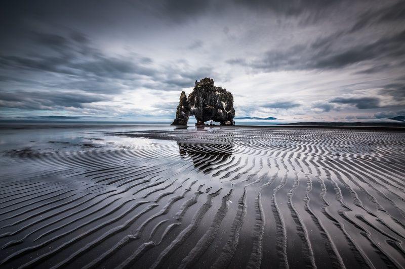 Дикое исландское животное на водопоеphoto preview