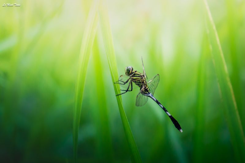 dragonfly Dragonflyphoto preview