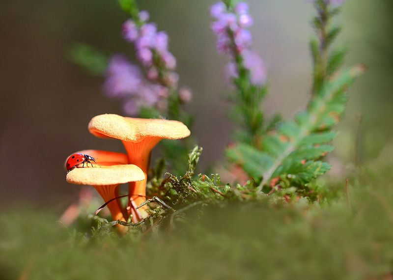 Лес,осень,грибы,Насекомые,мох. Первый день осени.photo preview