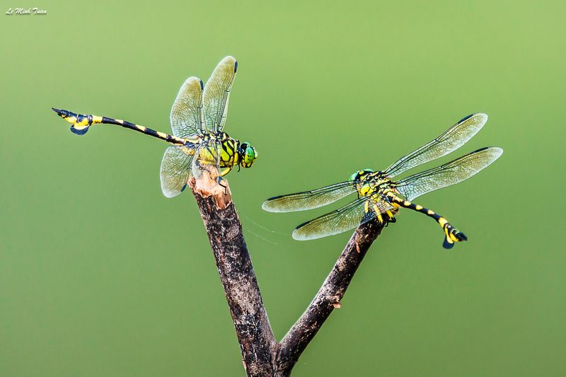 dragonflies Relaxingphoto preview