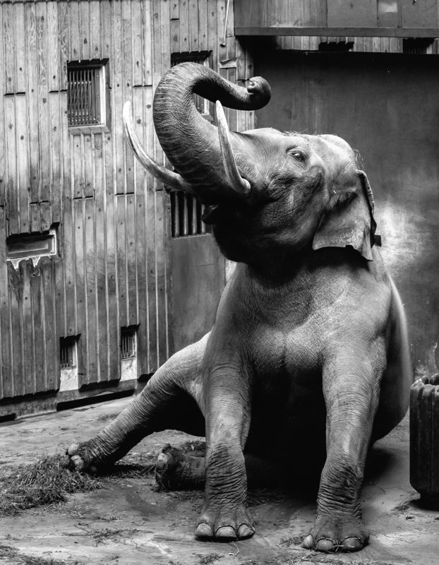 animals, nature, travel, life Elephantphoto preview