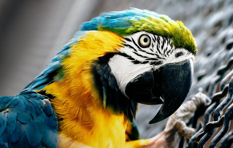 animals, nature, travel, life Попугайphoto preview