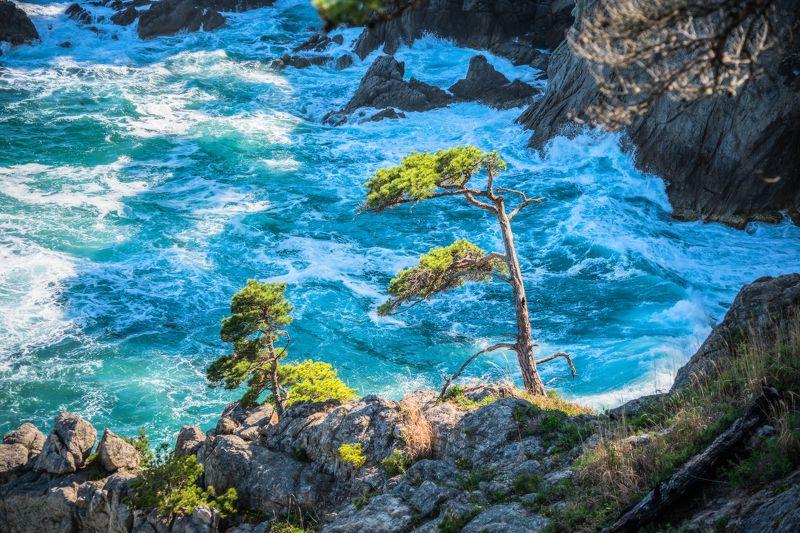 Приморье, Приморский край, Морской заповедник, море, сосны Борьба со стихиейphoto preview