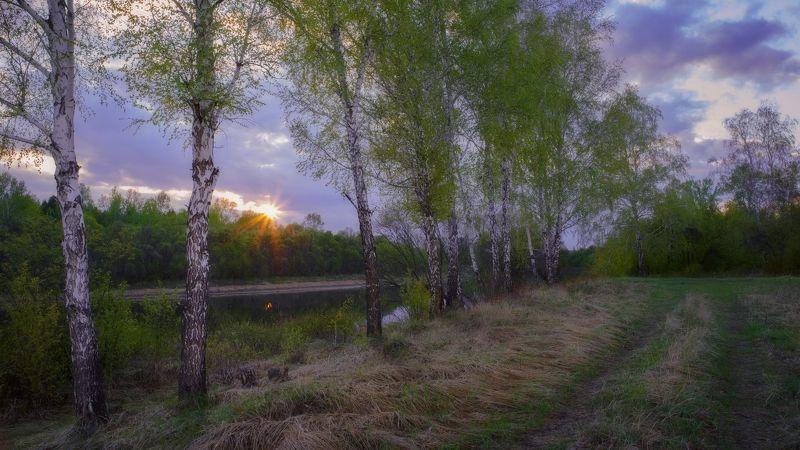 май,вечер,закат,берег реки,березы, молодая листва,may, evening, sunset, river bank, birch, young foliage, Майская листва.photo preview