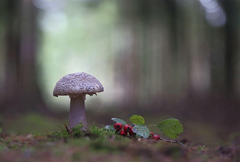 Осень,лес,гриб. Тихая охота.photo preview