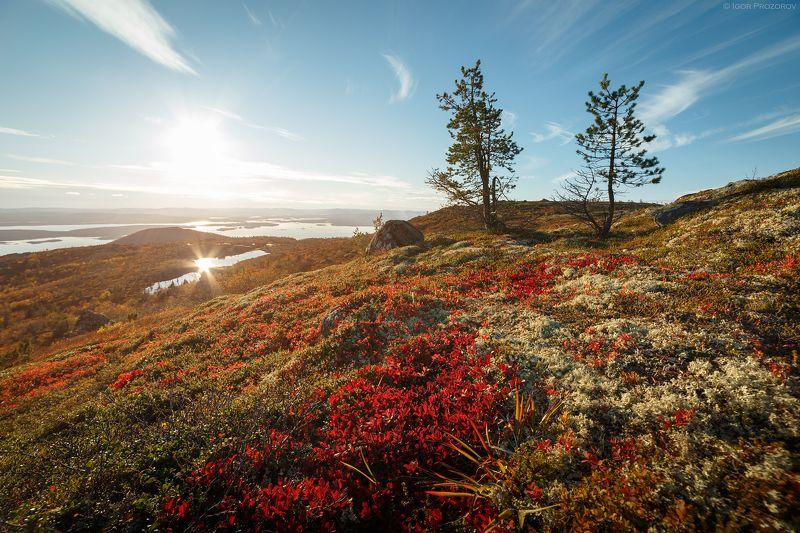 кольский полуостров, кандалакша, осень, белое море Осень в сопках Кольского полуостроваphoto preview