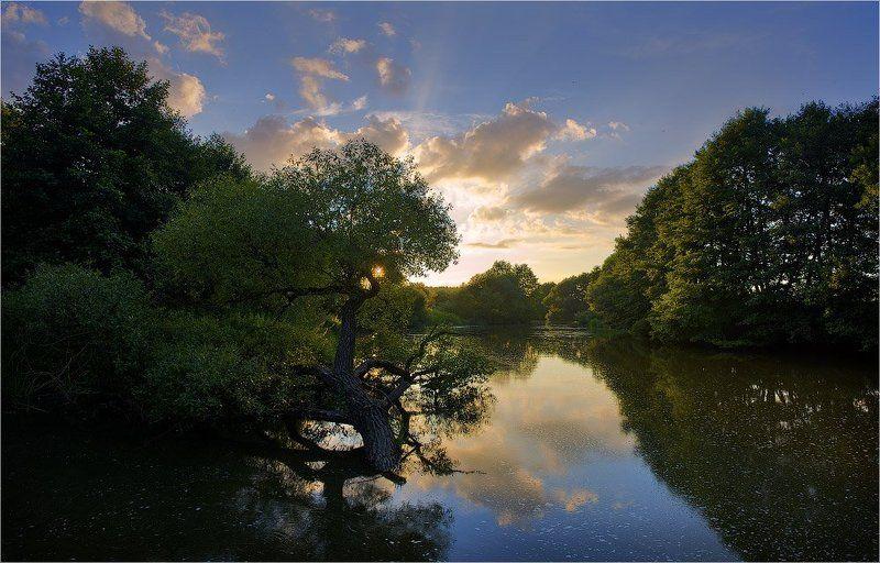 река, закат, дерево *photo preview