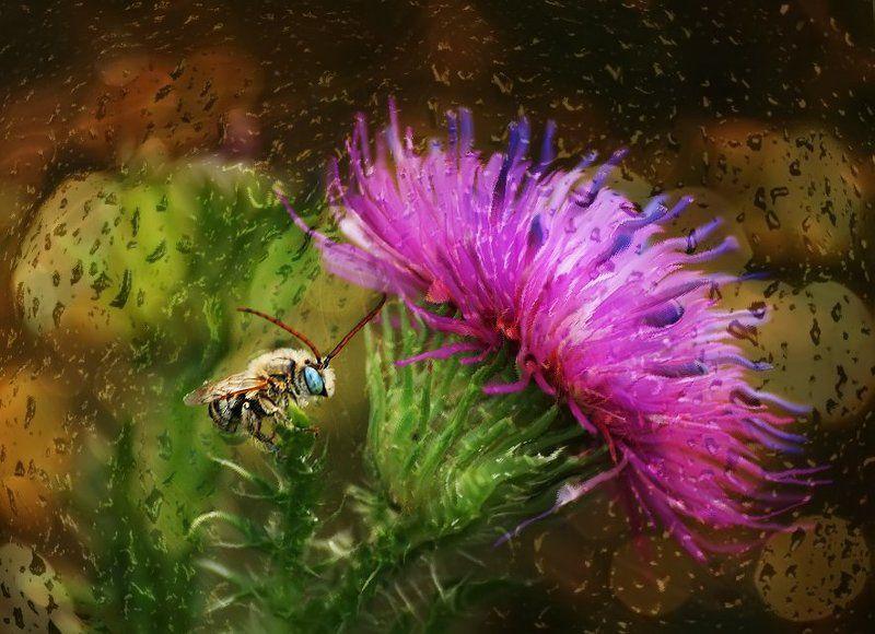 rare,  raisa rare,   лето,  розовые Явства маленькой мышки.photo preview