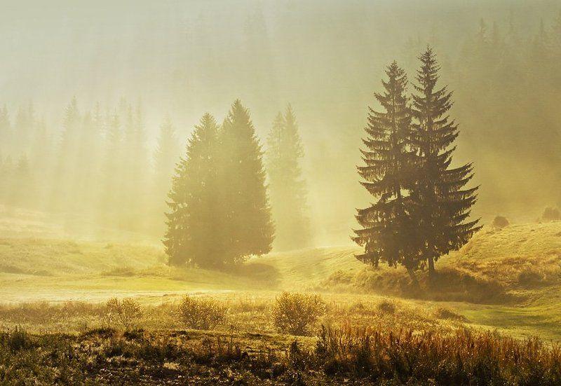 morning, rodopi, krusev, fogs ,sun rays, forest, Rodopi morningphoto preview