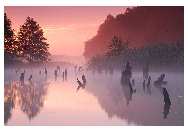 рассвет стволы река в мире грезphoto preview
