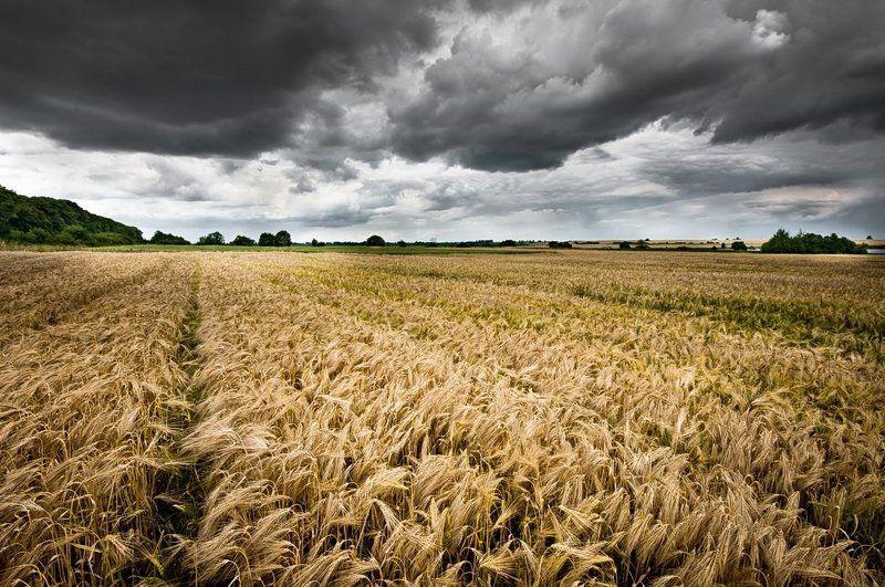 небо ,тучи, поле, буря photo preview