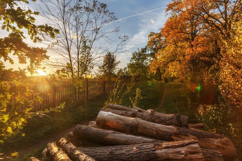 минск, беларусь, роща, осень, прогулка Прогулка в Рощеphoto preview