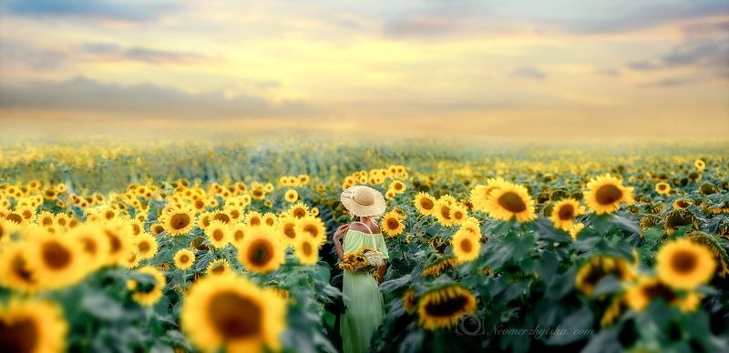 Sunflowersphoto preview