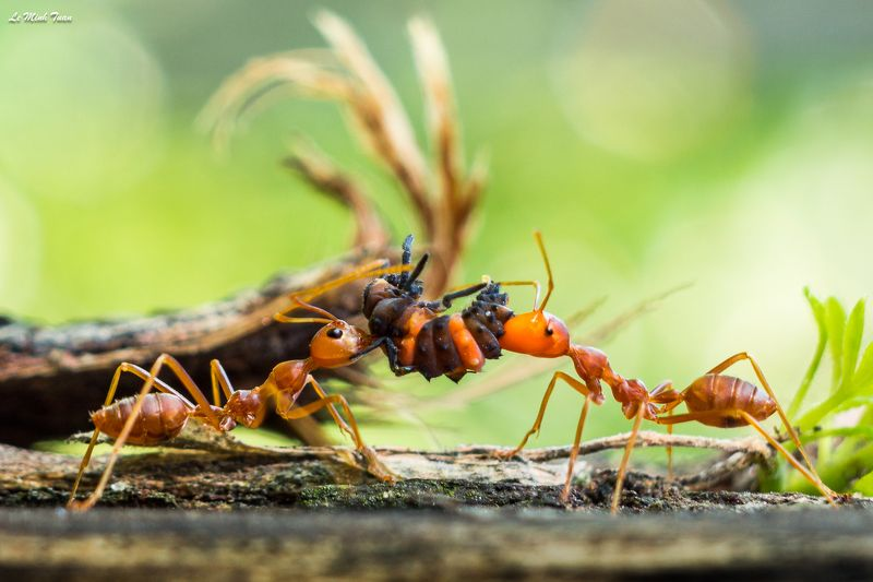 ants Sharing the foodphoto preview