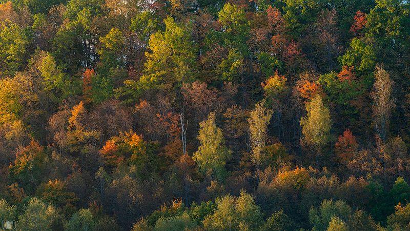 Разноцветные деревья в нежной закатной подсветкеphoto preview