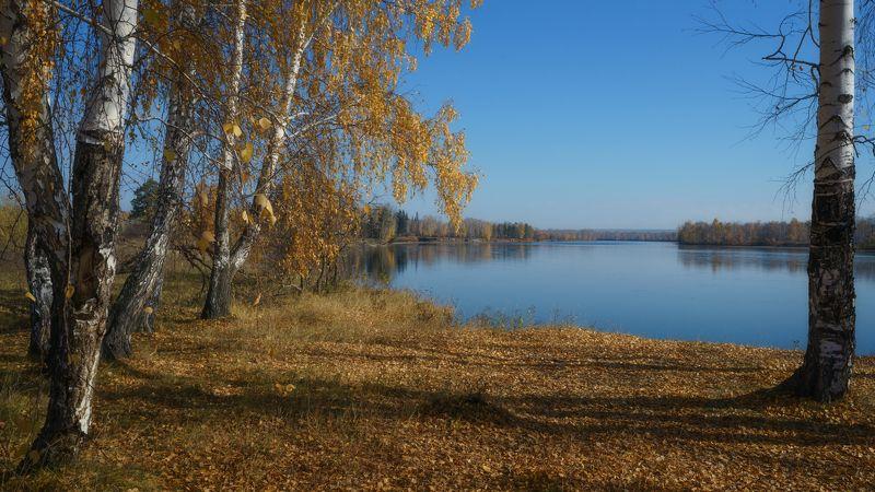 россия,осень,синее небо,река,берег реки,золото берёз, russia, autumn, blue sky, river, river bank, gold birch, Русь моя ...photo preview