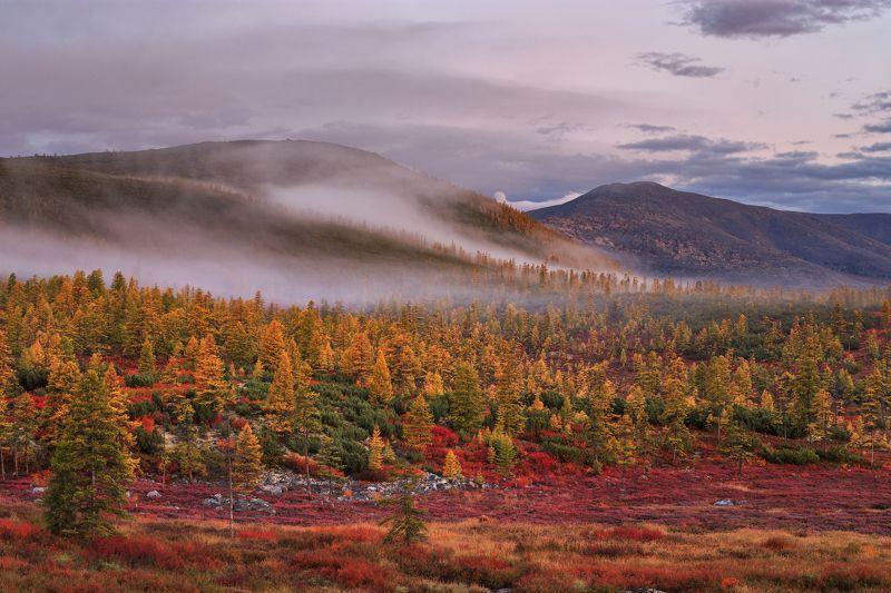 2018, россия, колыма, утро, краски, осень, горы, лиственницы, туман, тучи, деревья Осень на Колымеphoto preview