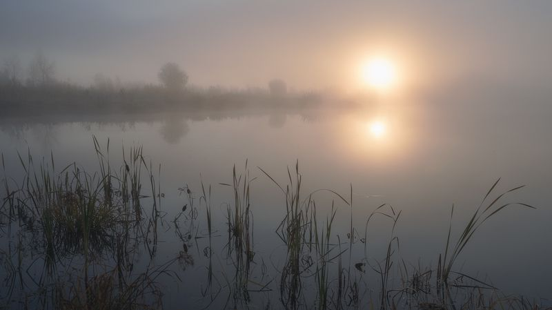 утро, озеро,туман,солнце,болотная трава ,рогоз,morning, lake, fog, sun, marsh grass, cattail ***photo preview