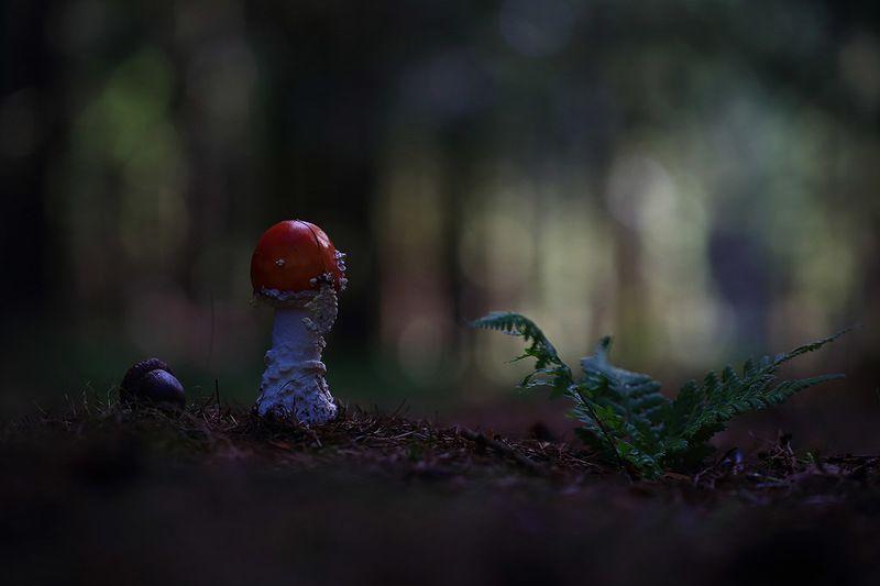 Гриб,лес,осень. Потерялась в темном лесу.photo preview