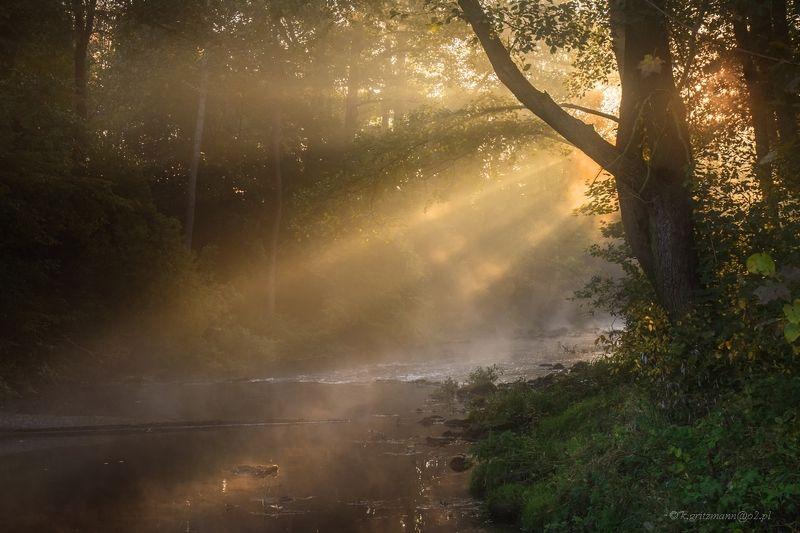 golden riverphoto preview