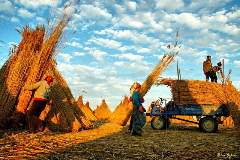 harvest time. Harvestphoto preview