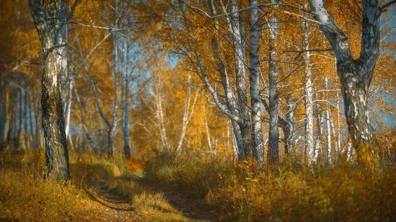 осень, рыжие берёзы, оранжевая роща, солнечный день, хорошее настроение,autumn, red birch, orange grove, sunny day, good mood Привет рыжая !photo preview