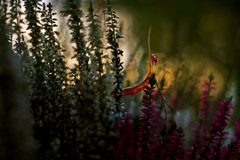Ladybirdphoto preview