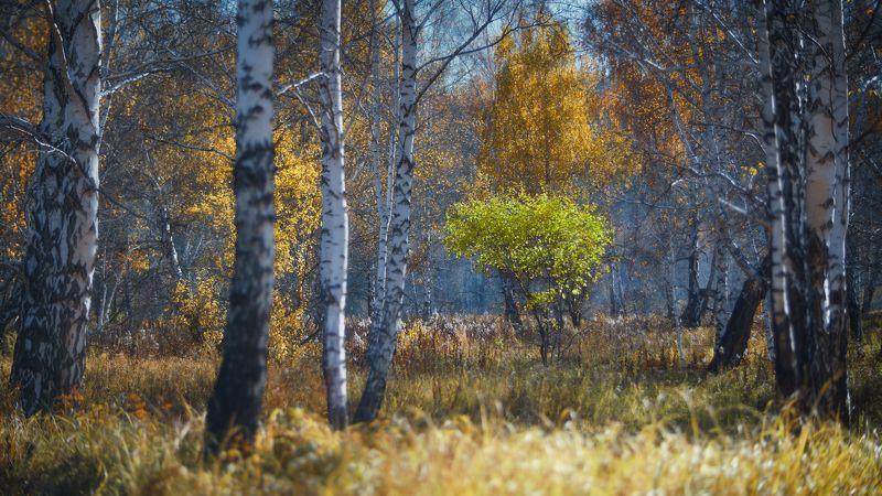 осень, берёзы, зеленый куст, Неформалphoto preview