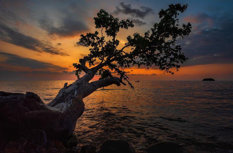 путешествие, Ко Чанг, закат, морской пейзаж, остров, Дерево заката.photo preview