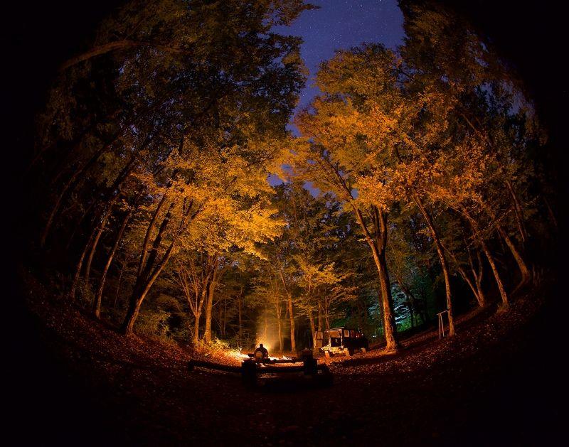 ночь, лес, осень,  Ночь в осеннем лесуphoto preview
