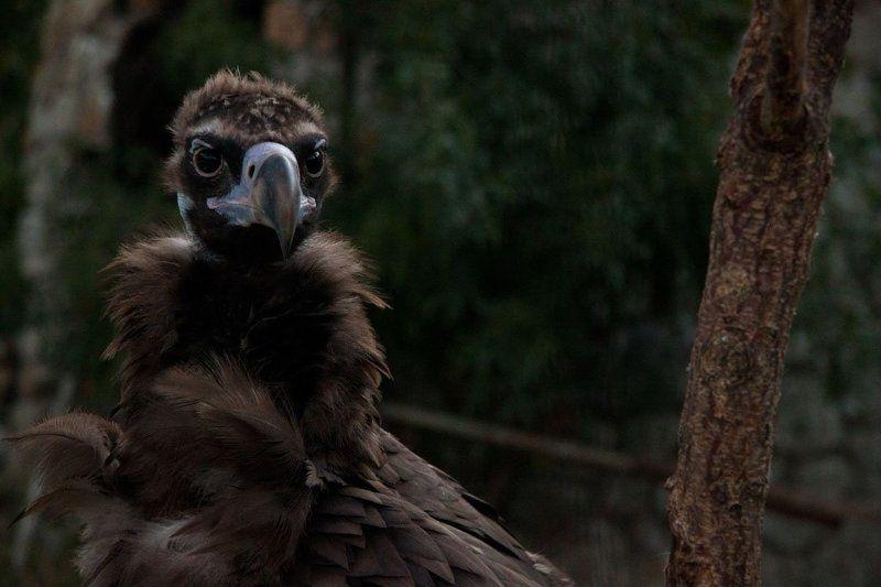 big bird portrait / портрет большой птичкиphoto preview
