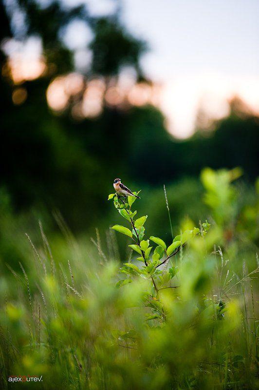 птица,лето,закат краски летаphoto preview