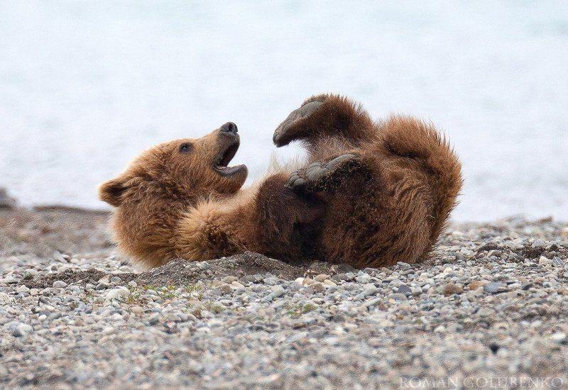 Я на солнышке лежу. Аляска / Sunbathing Alaska stylephoto preview