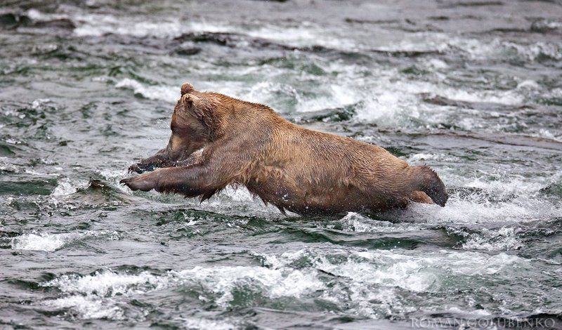 На самом-то деле медведи произошли от дельфинов / In reality, bears evolved from dolphinsphoto preview