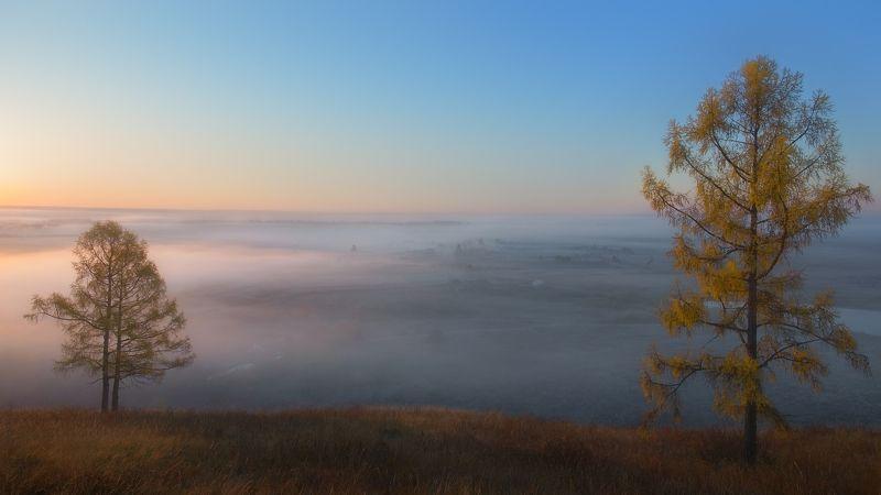 осень, туманное утро, золотые лиственницы, autumn, foggy morning, golden larches Провожая уплывающий туман...photo preview