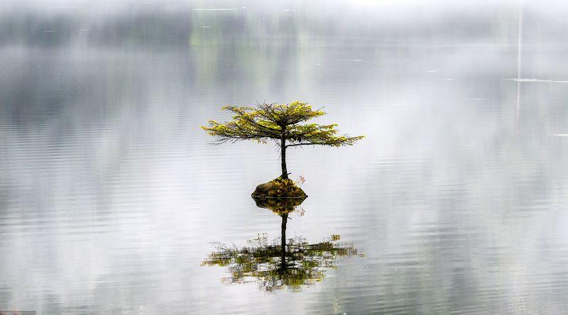 дерево, озеро, отражение, туман, Канада Одинокое деревоphoto preview