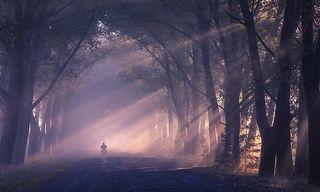 Туман укутал пелериной стволы деревьев и меня.