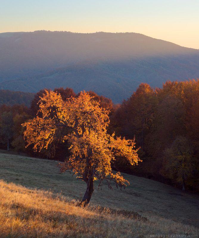 Карпаты, Украина, пейзаж, осень, золотая,пейзаж, природа, горы, лес, nature, landscape, autumn, forest, tree, mountains, carpathians Осень в Карпатахphoto preview