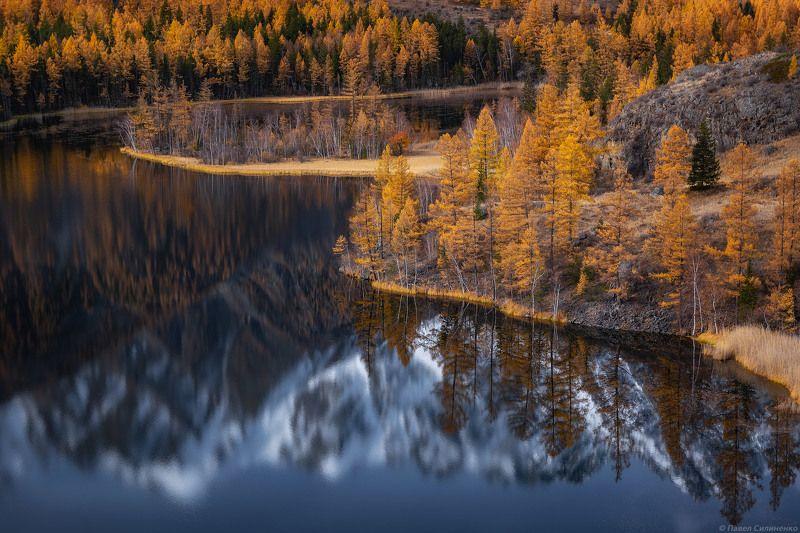 пейзаж, осень, лес, озеро, желтый, алтай, отражение, вода В долине Аргутаphoto preview