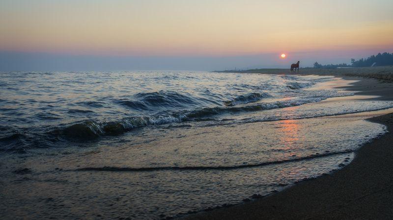 россия, сибирь, байкал, прибой, утро,восходящее солнце,конь,дымка,песок,russia, siberia, baikal, surf, morning, rising sun, horse, haze, sand Доброе утро !photo preview