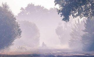 Сколько чудес за туманами кроется