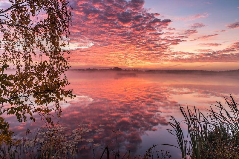 утро, рассвет, озеро, осень, туман Туманное утроphoto preview
