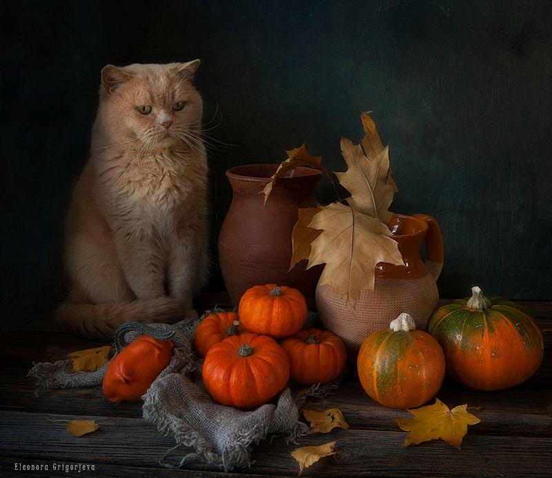 Кот и осеньphoto preview