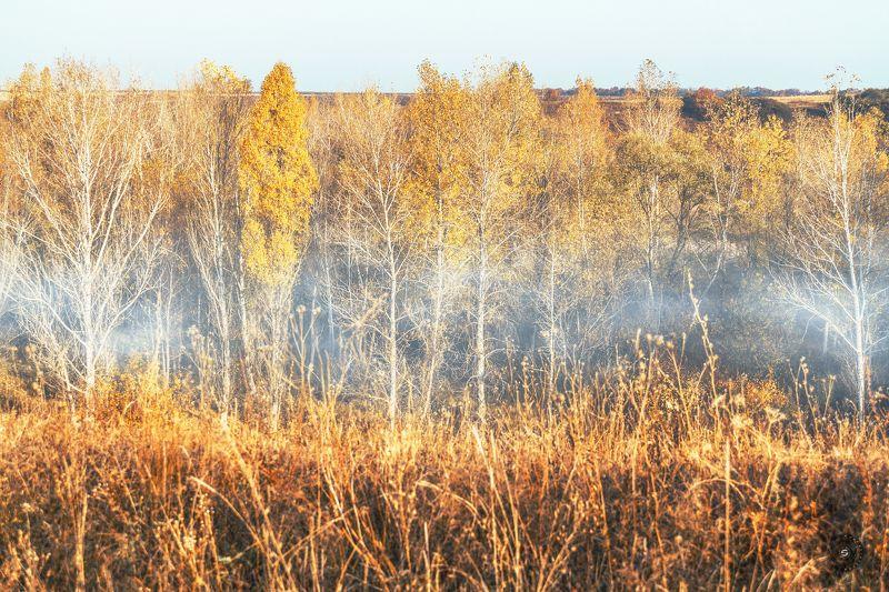 лес, утро, туман, осень, береза, небо Туманное утро...photo preview
