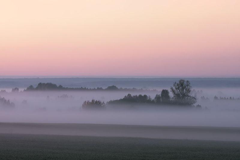 Сиреневый туманphoto preview