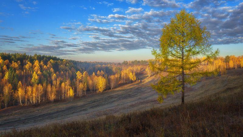 россия,осень,утро,пригорки, синее небо,золото берёз, желтая лиственница,осенний пейзаж,russia, autumn, morning, hillock, blue sky, birch gold, yellow larch, autumn landscape, Цвет, осеннего утра ...photo preview